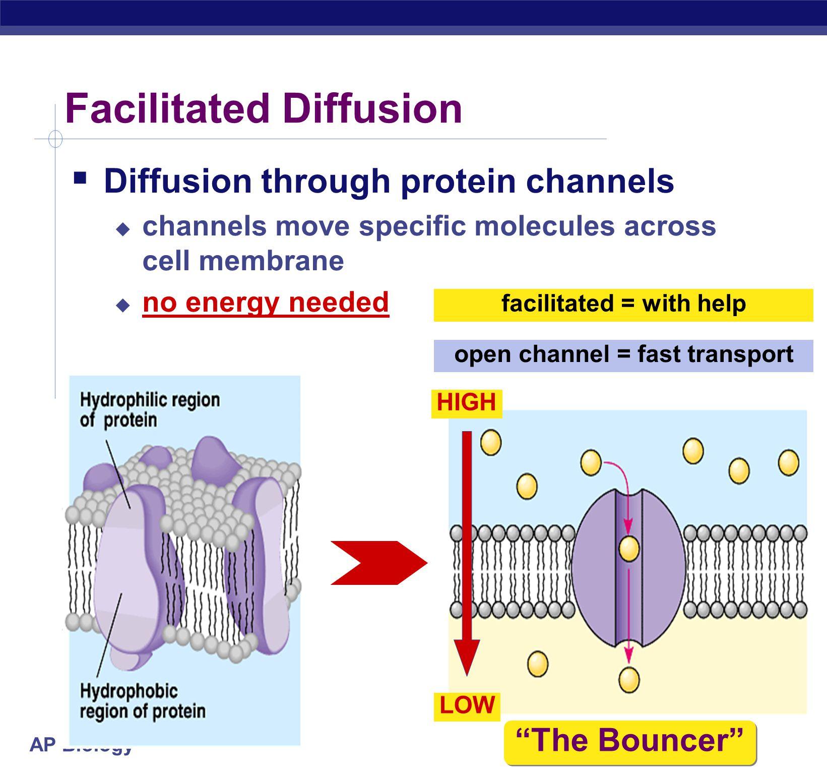 diffusion across cell membrane
