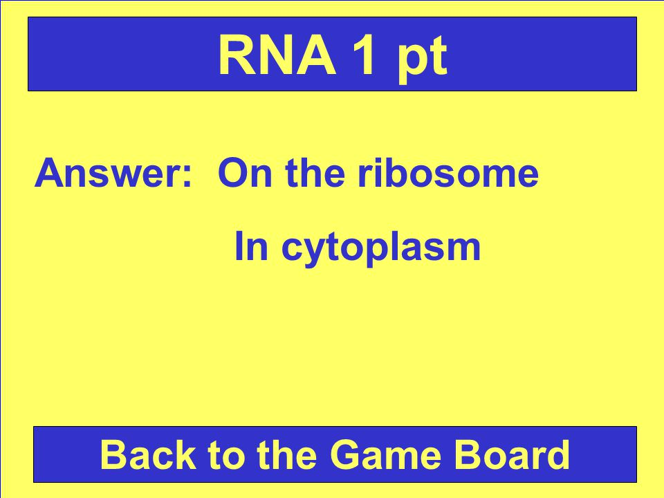 Question: List two places you can find RNA. Check Your Answer RNA 1 pt