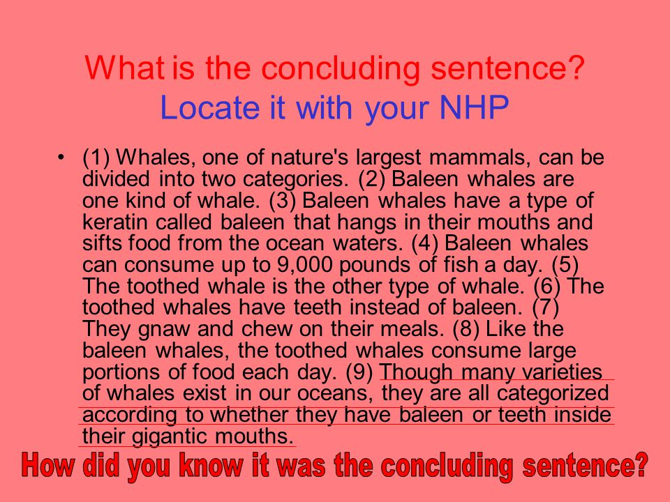 What can be a good conclusion sentence?