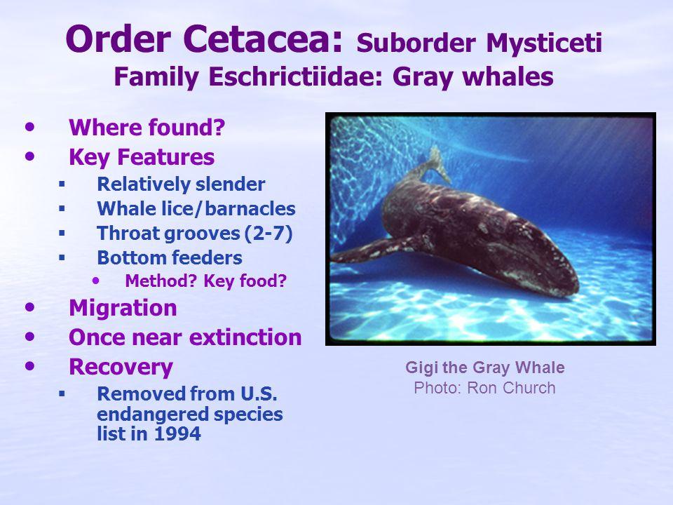 Marine Mammals List