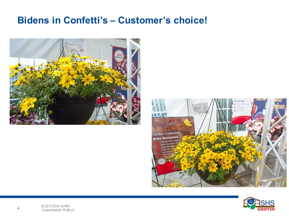 4 © 2013 SHS Griffin Classification: PUBLIC 4 Bidens In Confettiu0027s U2013  Customeru0027s Choice!