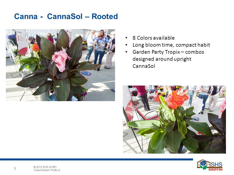 5 © 2013 SHS Griffin Classification: PUBLIC 5 Canna   CannaSol U2013 Rooted 8  Colors Available Long Bloom Time, Compact Habit Garden Party Tropix U2013  Combos ...