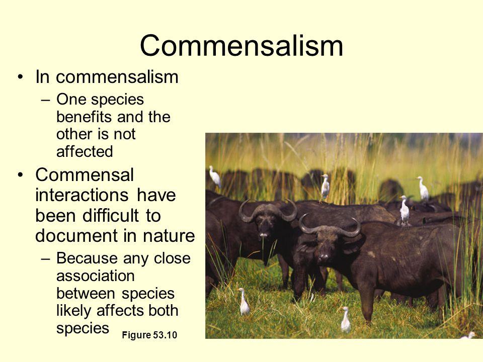 Symbiotic relationships grasslands.