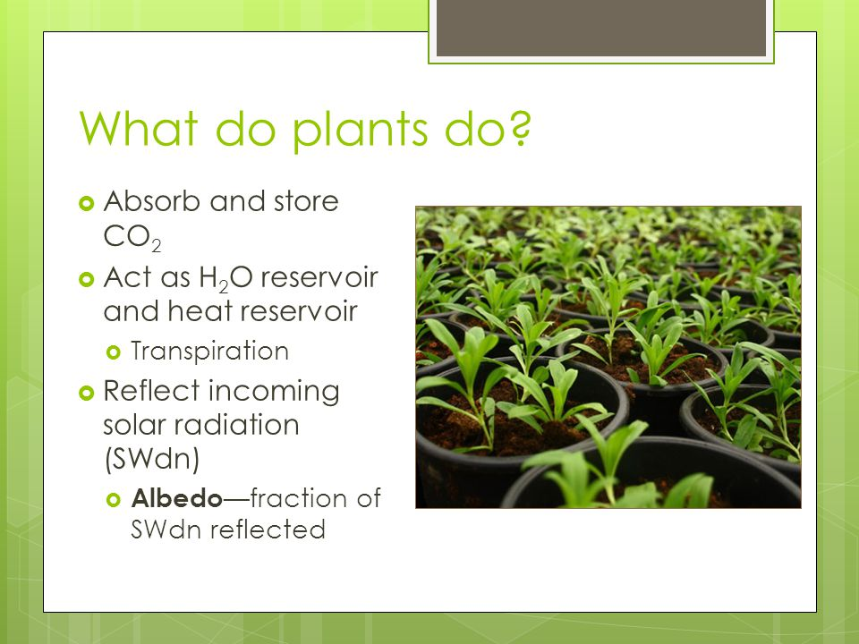 What do plants do.