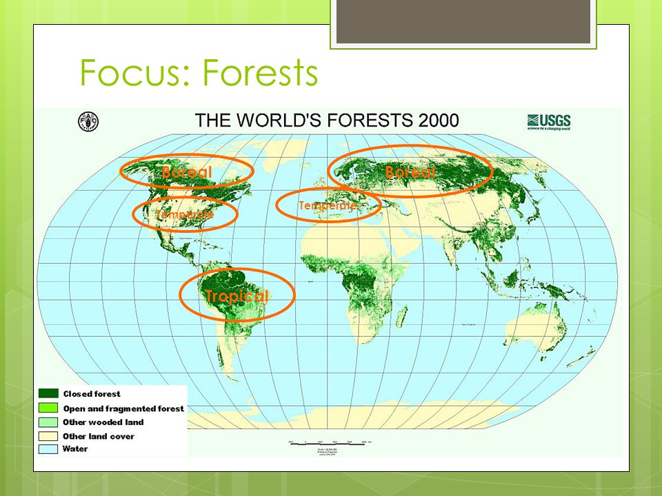 Focus: Forests Tropical Boreal Temperate Boreal Temperate