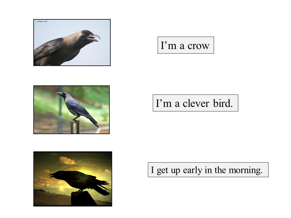 I'm a crow I'm a clever bird. I get up early in the morning.