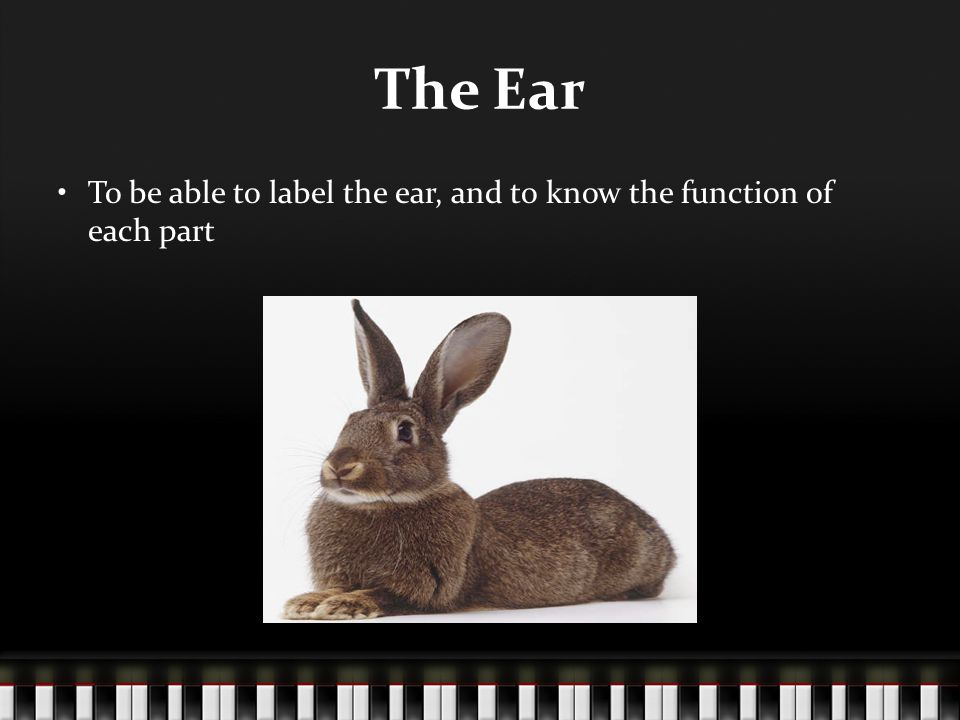 The Ear To be able to label the ear, and to know the function of each part