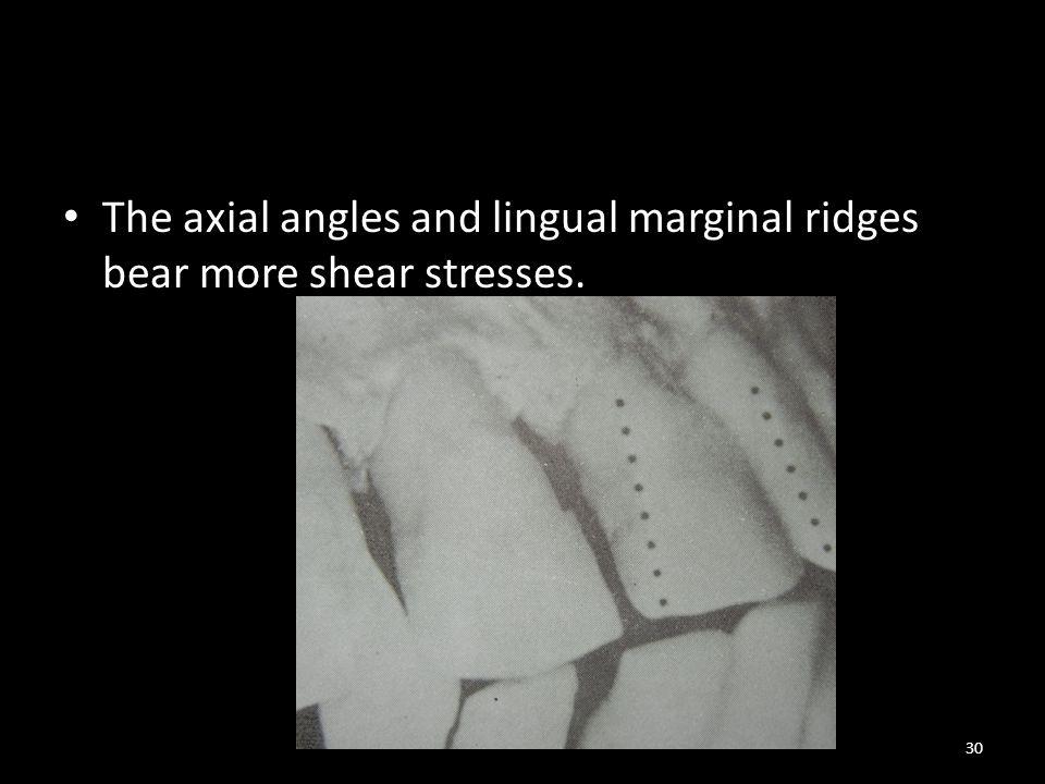 The axial angles and lingual marginal ridges bear more shear stresses. 30