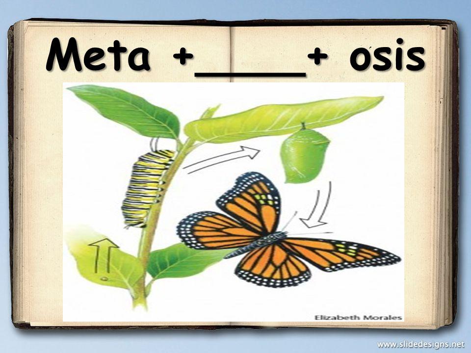 Meta +____+ osis