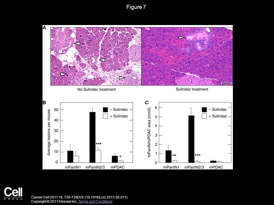 Figure 8 Cancer Cell 2011 19, 728-739DOI: (10.1016/j.ccr.2011.05.011) Copyright © 2011 Elsevier Inc.
