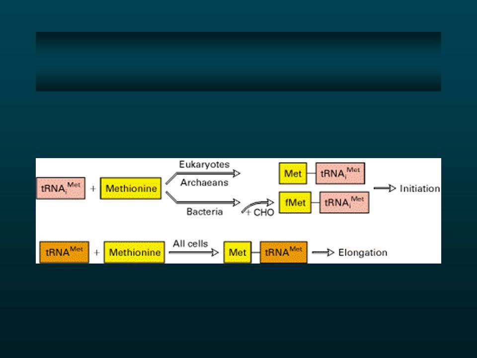 tRNA Met Metionina +