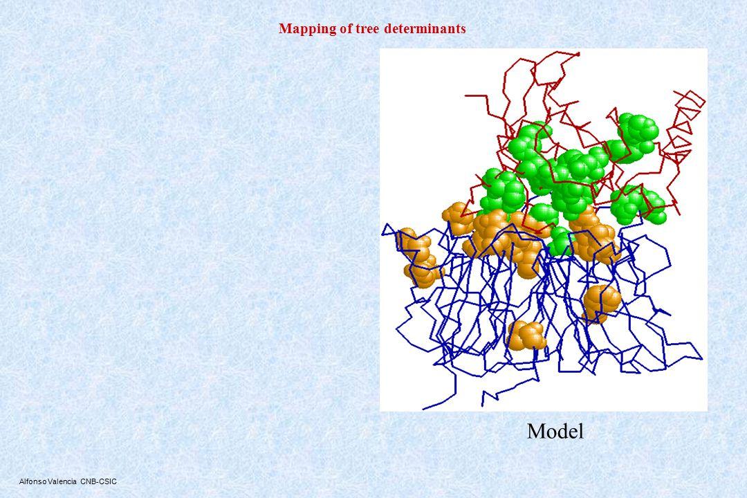 A dimerization model for FtsA Carettoni, et al., (2002) Phage-display and correlated mutations identify an essential region of subdomain 1C involved in homodimerization of Escherichia coli FtsA Proteins Löwe et al., Nature 00