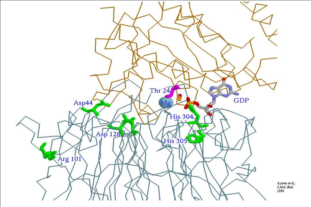 Alfonso Valencia CNB-CSIC Model D44 GDP Mg++ H270 R206 H304 E157 D128 H78 H410 Green: Km, red: Kcat.