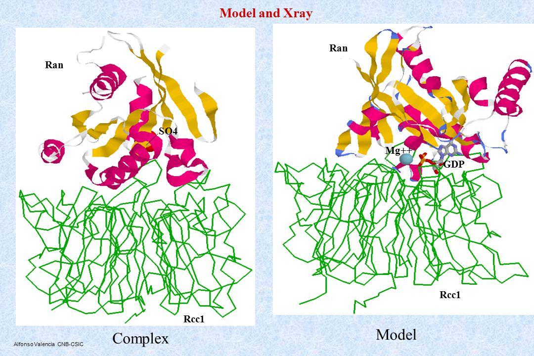 Alfonso Valencia CNB-CSIC Complex Ran SO4 Rcc1 Model and Xray Model Ran Mg++ GDP Rcc1
