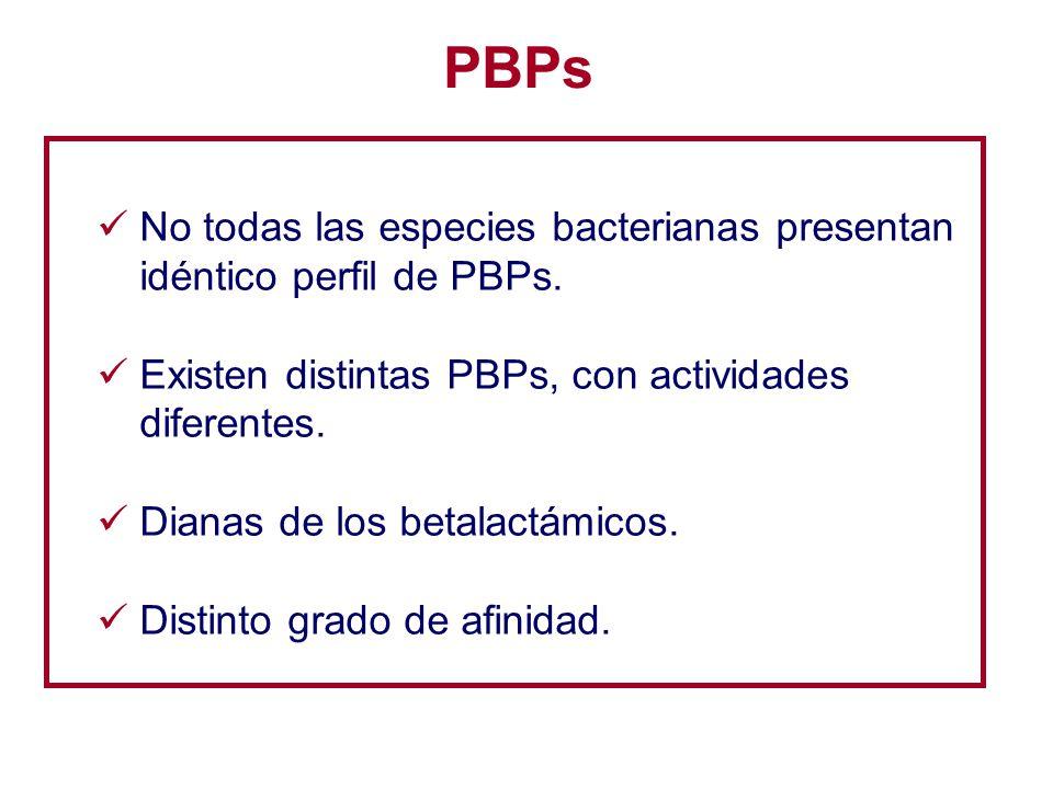 PBPs No todas las especies bacterianas presentan idéntico perfil de PBPs. Existen distintas PBPs, con actividades diferentes. Dianas de los betalactám