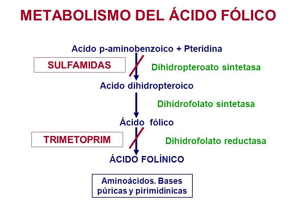 Acido p-aminobenzoico + Pteridina Dihidropteroato sintetasa Acido dihidropteroico Dihidrofolato sintetasa Ácido fólico Dihidrofolato reductasa ÁCIDO F