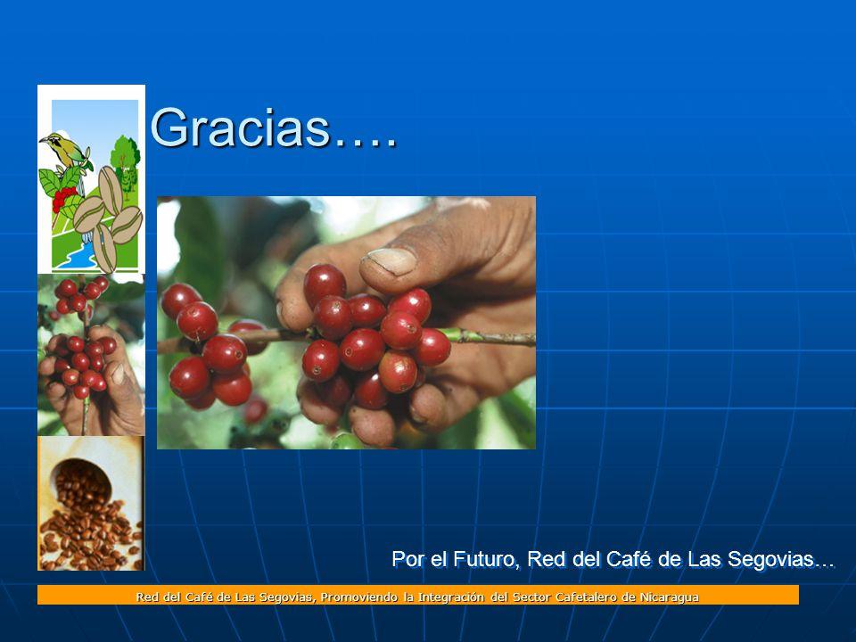 Red del Café de Las Segovias, Promoviendo la Integración del Sector Cafetalero de Nicaragua Por el Futuro, Red del Café de Las Segovias… Gracias….