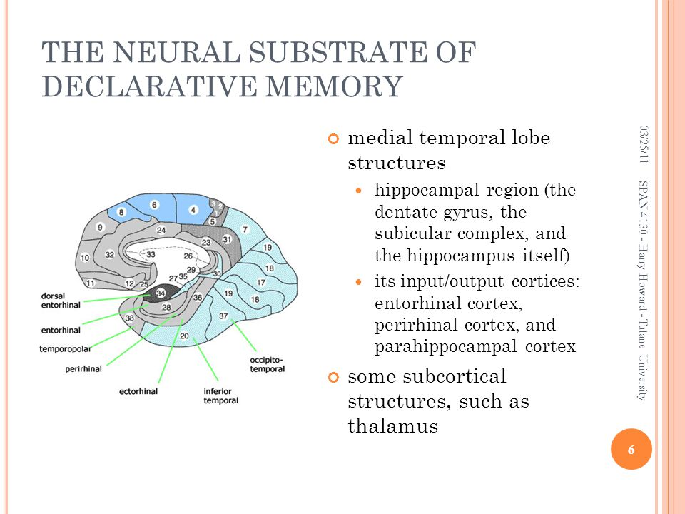 THE NEURAL SUBSTRATE OF DECLARATIVE MEMORY medial temporal lobe structures hippocampal region (the dentate gyrus, the subicular complex, and the hippo