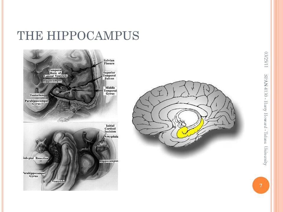 THE HIPPOCAMPUS 03/25/11 SPAN 4130 - Harry Howard - Tulane University 7