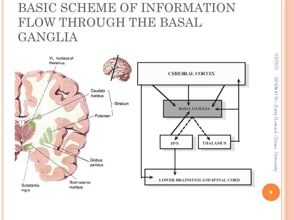 BASIC SCHEME OF INFORMATION FLOW THROUGH THE BASAL GANGLIA 03/25/11 SPAN 4130 - Harry Howard - Tulane University 9