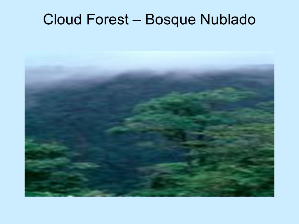 Cloud Forest – Bosque Nublado