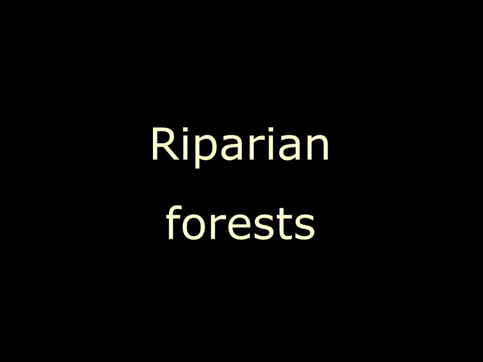 Riparian forests