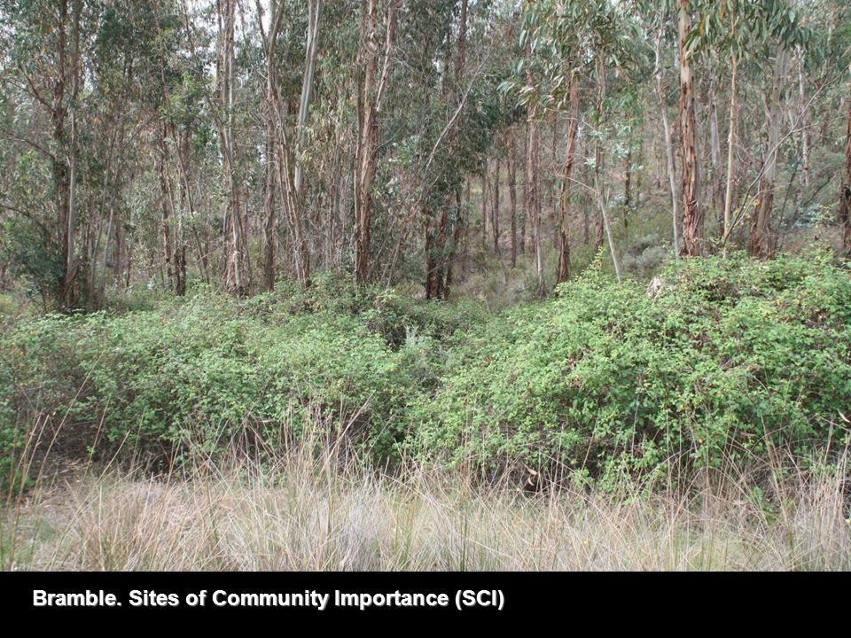 Bramble. Sites of Community Importance (SCI)