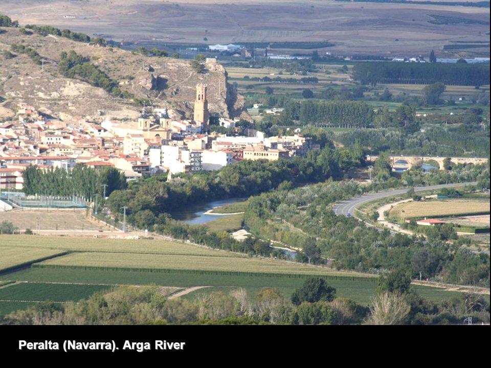 Peralta (Navarra). Arga River