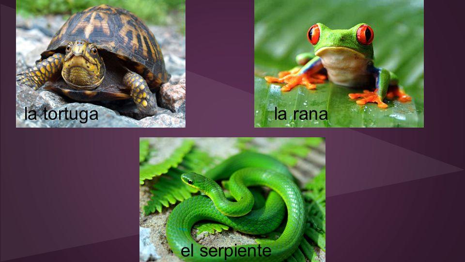 el serpiente la ranala tortuga