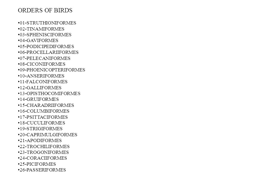 ORDERS OF BIRDS 01-STRUTHIONIFORMES 02-TINAMIFORMES 03-SPHENISCIFORMES 04-GAVIFORMES 05-PODICIPEDIFORMES 06-PROCELLARIIFORMES 07-PELECANIFORMES 08-CICONIIFORMES 09-PHOENICOPTERIFORMES 10-ANSERIFORMES 11-FALCONIFORMES 12-GALLIFORMES 13-OPISTHOCOMIFORMES 14-GRUIFORMES 15-CHARADRIIFORMES 16-COLUMBIFORMES 17-PSITTACIFORMES 18-CUCULIFORMES 19-STRIGIFORMES 20-CAPRIMULGIFORMES 21-APODIFORMES 22-TROCHILIFORMES 23-TROGONIFORMES 24-CORACIIFORMES 25-PICIFORMES 26-PASSERIFORMES