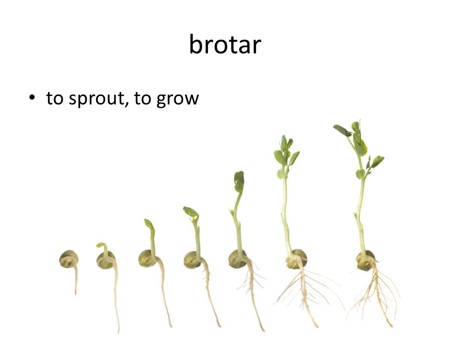 brotar to sprout, to grow