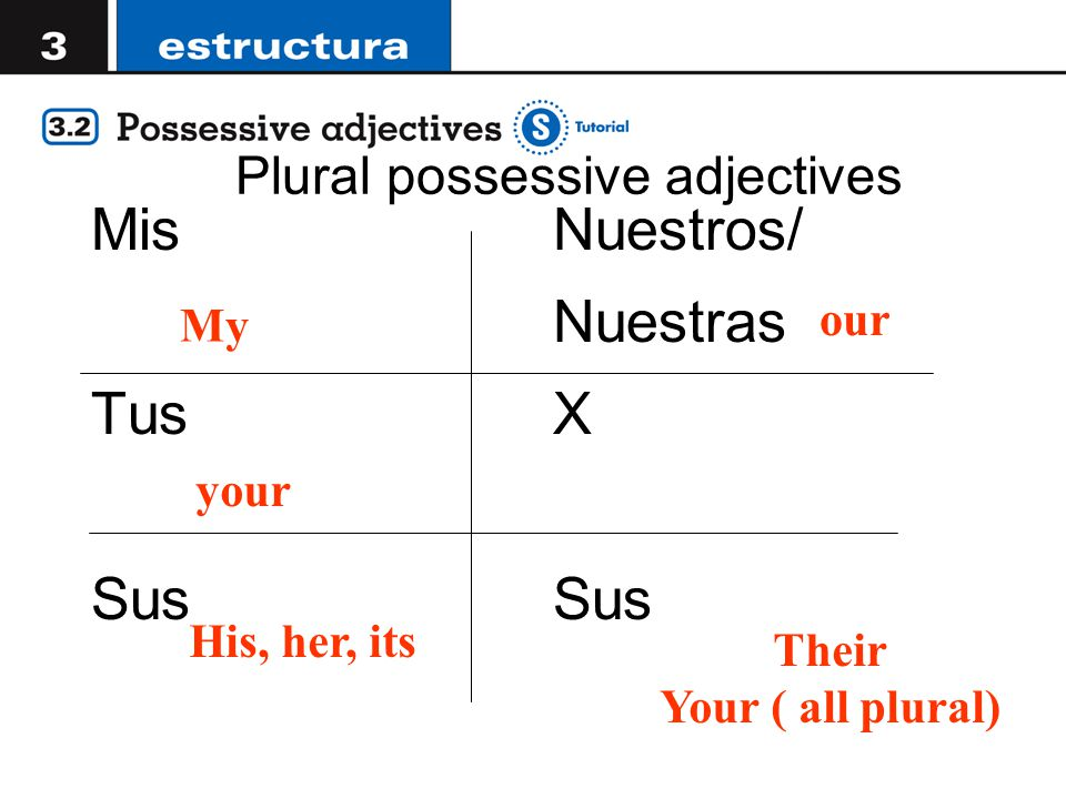 Plural possessive adjectives Mis Tus Sus Nuestros/ Nuestras X Sus My your His, her, its our Their Your ( all plural)