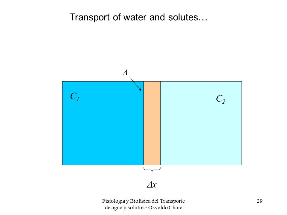Fisiología y Biofísica del Transporte de agua y solutos - Osvaldo Chara 29 xx C2C2 C1C1 A Transport of water and solutes…