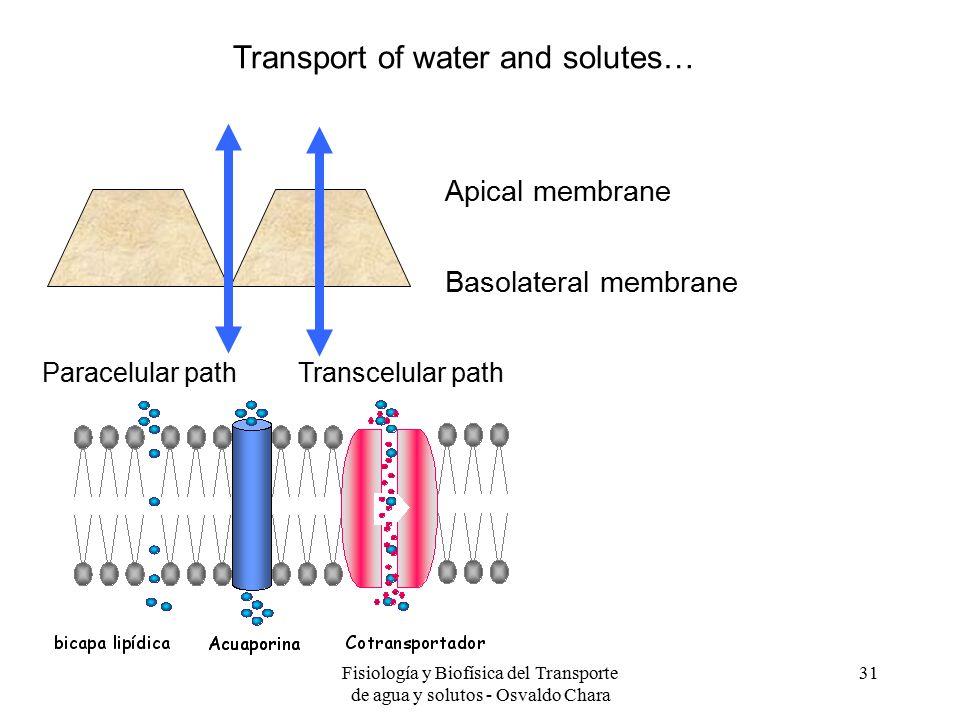 Fisiología y Biofísica del Transporte de agua y solutos - Osvaldo Chara 31 Apical membrane Basolateral membrane Paracelular pathTranscelular path Transport of water and solutes…