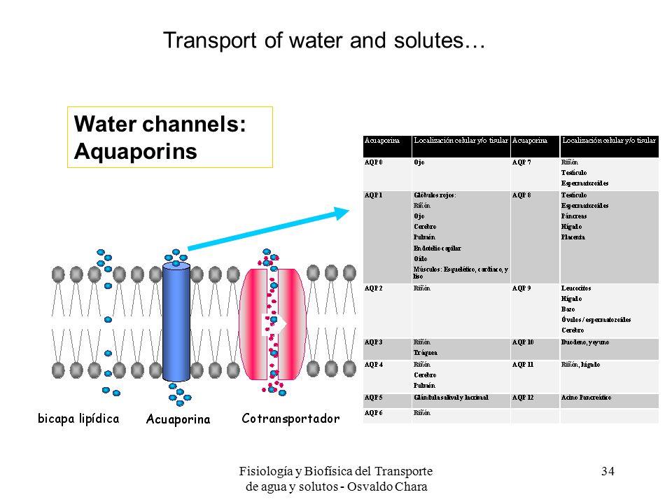 Fisiología y Biofísica del Transporte de agua y solutos - Osvaldo Chara 34 Water channels: Aquaporins Transport of water and solutes…