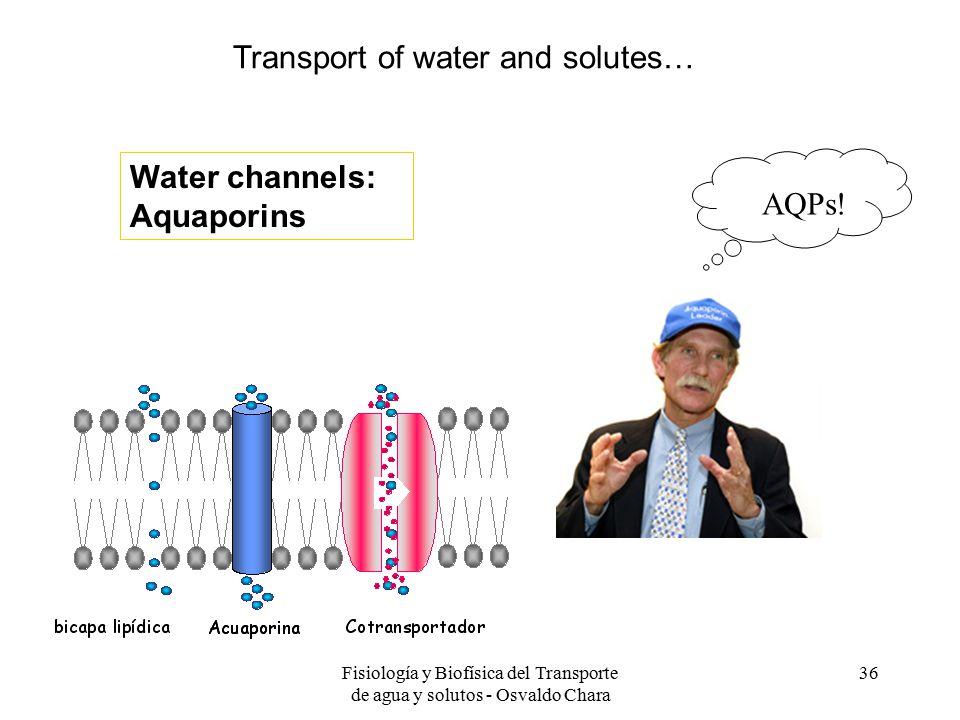 Fisiología y Biofísica del Transporte de agua y solutos - Osvaldo Chara 36 Water channels: Aquaporins AQPs.