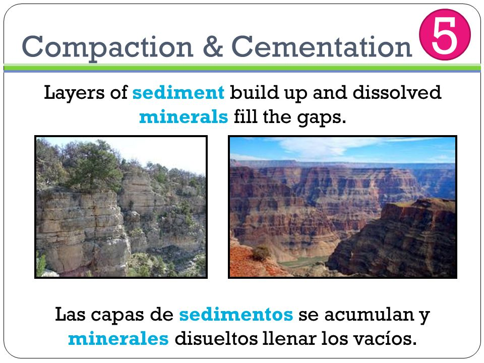 Compaction & Cementation Layers of sediment build up and dissolved minerals fill the gaps. Las capas de sedimentos se acumulan y minerales disueltos l