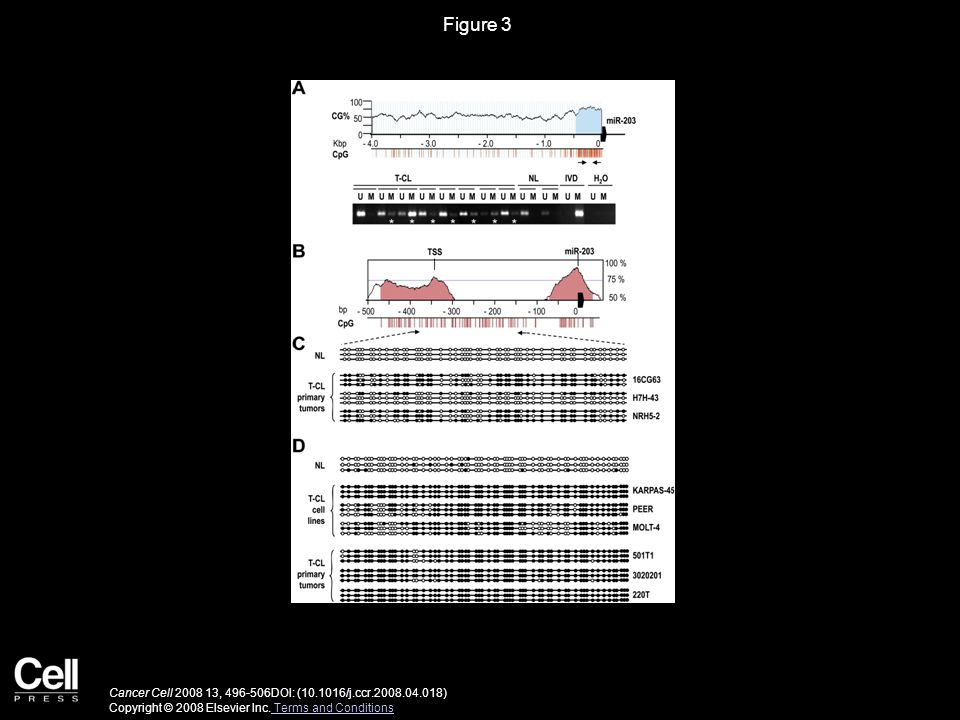 Figure 3 Cancer Cell 2008 13, 496-506DOI: (10.1016/j.ccr.2008.04.018) Copyright © 2008 Elsevier Inc.