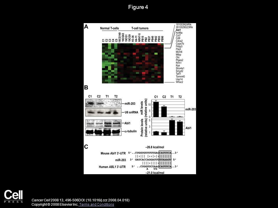 Figure 4 Cancer Cell 2008 13, 496-506DOI: (10.1016/j.ccr.2008.04.018) Copyright © 2008 Elsevier Inc.