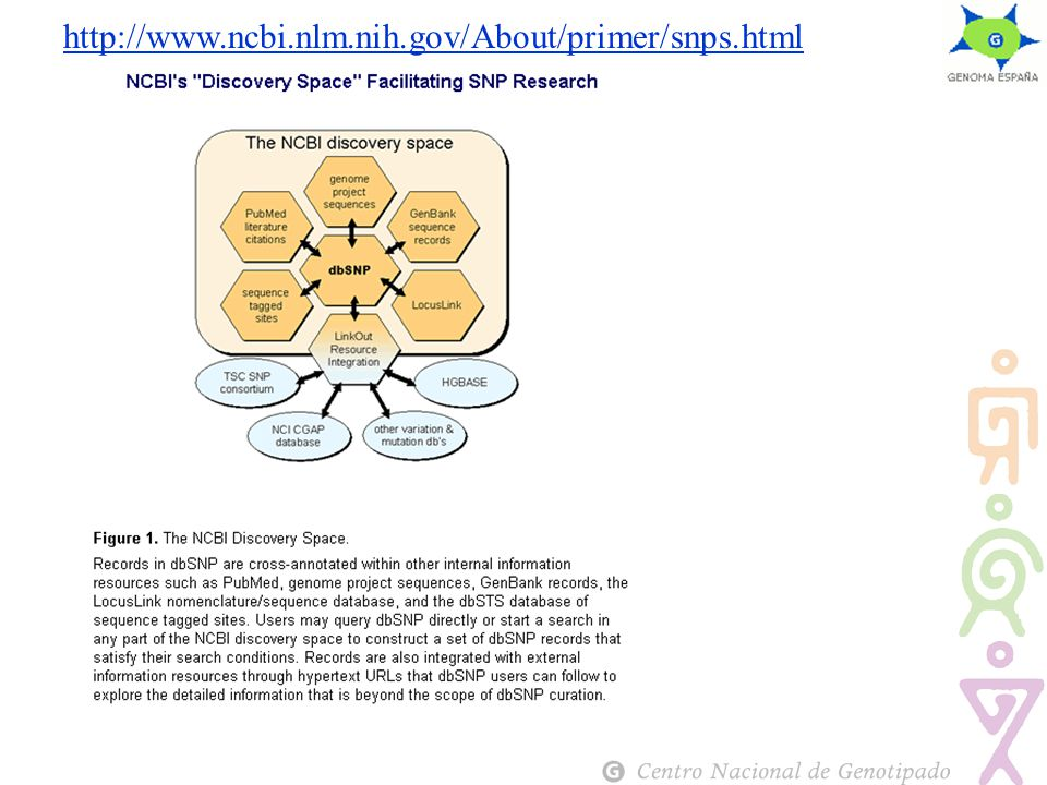 http://www.ncbi.nlm.nih.gov/About/primer/snps.html