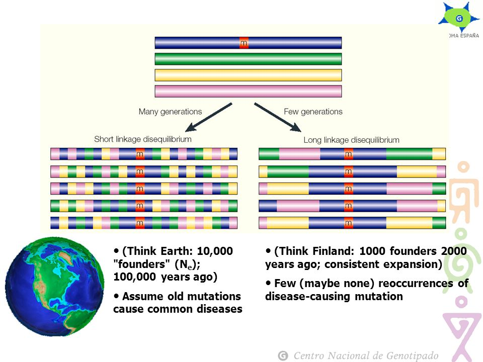 (Think Finland: 1000 founders 2000 years ago; consistent expansion) Few (maybe none) reoccurrences of disease-causing mutation (Think Earth: 10,000 founders (N e ); 100,000 years ago) Assume old mutations cause common diseases
