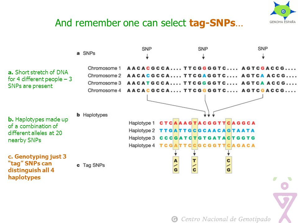 And remember one can select tag-SNPs… a.