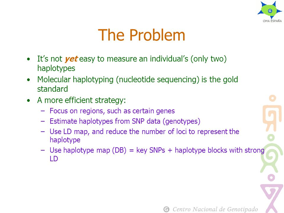 The Problem It's not yet easy to measure an individual's (only two) haplotypes Molecular haplotyping (nucleotide sequencing) is the gold standard A more efficient strategy: –Focus on regions, such as certain genes –Estimate haplotypes from SNP data (genotypes) –Use LD map, and reduce the number of loci to represent the haplotype –Use haplotype map (DB) = key SNPs + haplotype blocks with strong LD