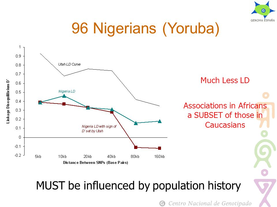 96 Nigerians (Yoruba) Much Less LD Associations in Africans a SUBSET of those in Caucasians MUST be influenced by population history