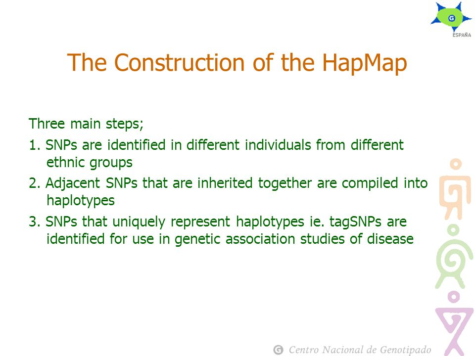 The Construction of the HapMap Three main steps; 1.