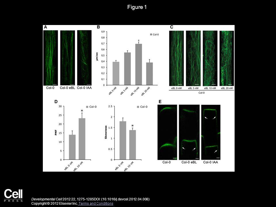 Figure 2 Developmental Cell 2012 22, 1275-1285DOI: (10.1016/j.devcel.2012.04.008) Copyright © 2012 Elsevier Inc.