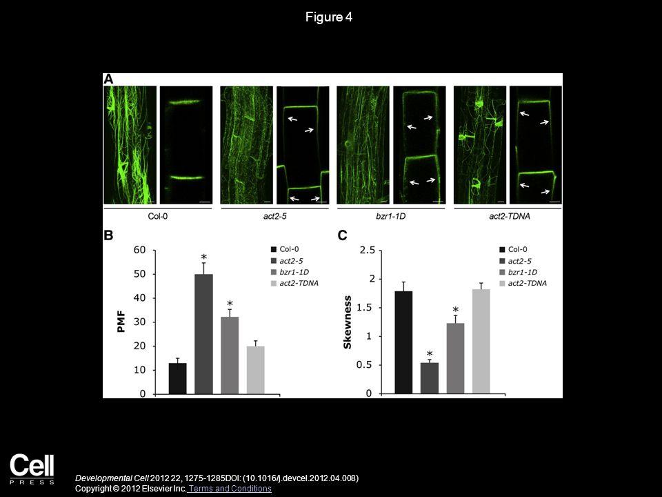 Figure 5 Developmental Cell 2012 22, 1275-1285DOI: (10.1016/j.devcel.2012.04.008) Copyright © 2012 Elsevier Inc.
