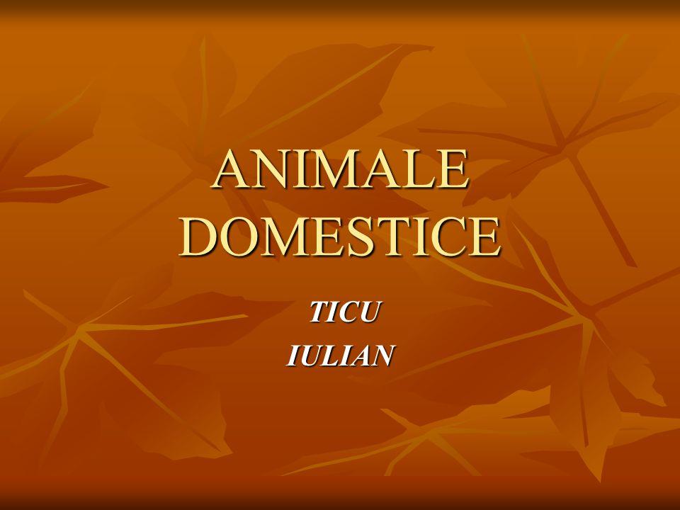 ANIMALE DOMESTICE TICU TICUIULIAN