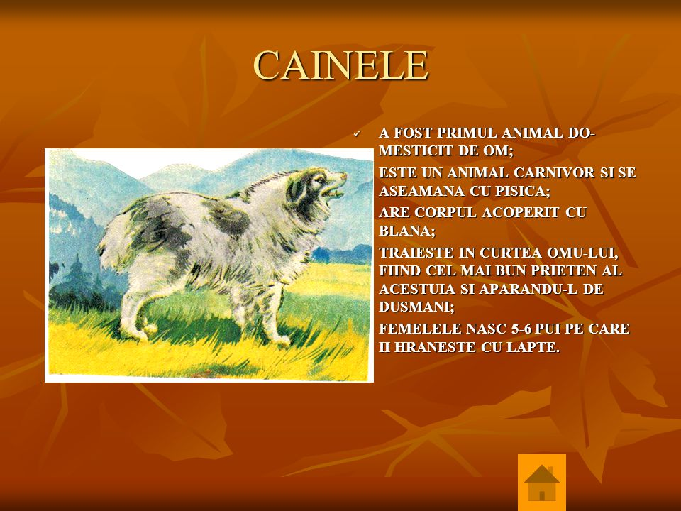 CAINELE A FOST PRIMUL ANIMAL DO- MESTICIT DE OM; A FOST PRIMUL ANIMAL DO- MESTICIT DE OM; ESTE UN ANIMAL CARNIVOR SI SE ASEAMANA CU PISICA; ESTE UN AN