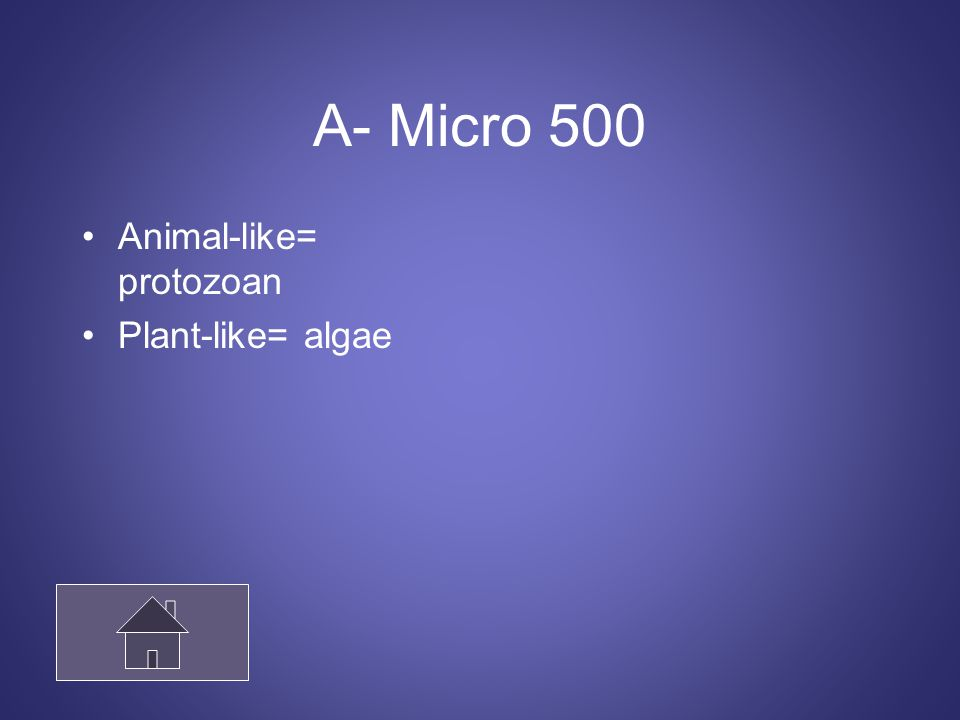A- Micro 500 Animal-like= protozoan Plant-like= algae